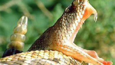 Photo of Мешканця Сколівщини госпіталізували через укус змії