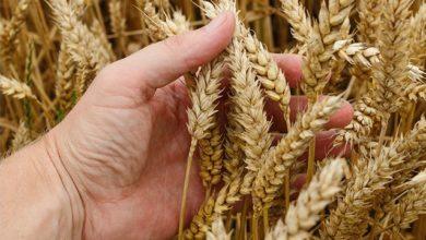 Photo of В умовах посухи дешевих кредитів для фермерів замало. Потрібна програма агрострахування – Володимир Лапа