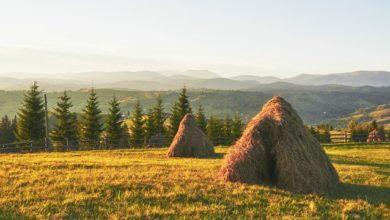 Photo of Як розділять землю державних сільгосппідприємств: закон пройшов перше читання