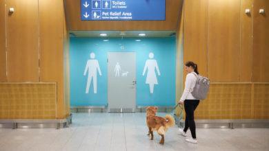 Photo of В аеропорту Гельсінкі з'явилися туалети для домашніх тварин: фото