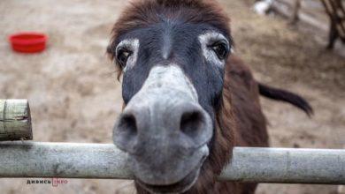 Photo of Львів'ян просять допомогти зібрати кошти на корм для мешканців «Домівки врятованих тварин»