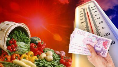 Photo of Ціни на продукти: чи вплине аномально тепла зима та чого чекати навесні