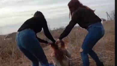 Photo of Побиття школярки у Житомирській області: Поліція повідомила про підозру двом дівчатам