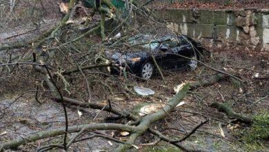 Photo of Сильний вітер у Львові пошкодив три автівки та повалив дерева