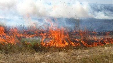Photo of Пожежа сухої трави на Львівщині: 60-річний чоловік отримав опіки