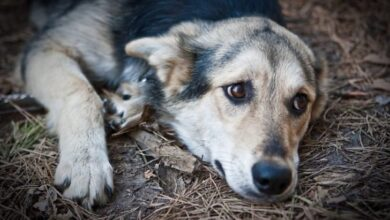 Photo of Львів'ян запрошують взяти участь в благодійному аукціоні зустрічей, аби зібрати кошти для допомоги безхатнім тваринам