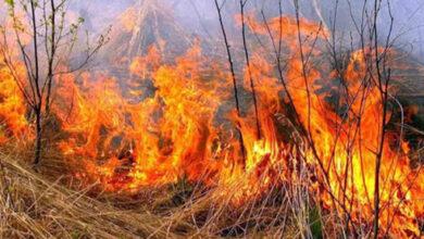 Photo of Мешканка Сокальщини потрапила у реанімацію з опіками через спалювання сухої трави