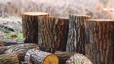 Photo of На Сокальщині викрили схему незаконної вирубки та експорту лісу