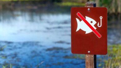Photo of У водоймах Львівщини з 1 квітня стартує нерестова заборона на вилов риби
