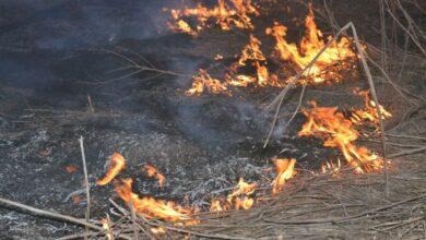 Photo of За минулу добу в Києві 11 разів гасили пожежі в екосистемах, – речниця ДСНС