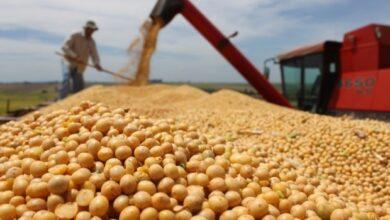 Photo of Директор сільгосппідприємста привласнив урожай сої на 12 мільйонів