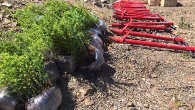 Photo of На Сколівщині висадили більше 5 га лісу