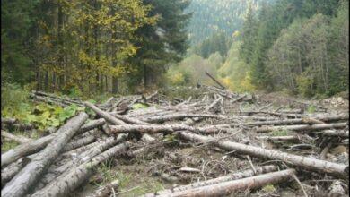 Photo of У Сколівському районі виявили незаконну рубку дерев