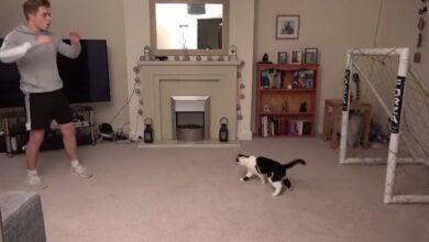 Photo of Відео про кота-голкіпера Мяунуеля Нойєра виявилося фейком