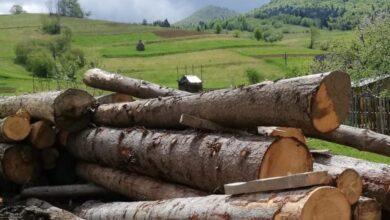 Photo of На Турківщині виявили майже сотню колод нелегально зрубаних дерев
