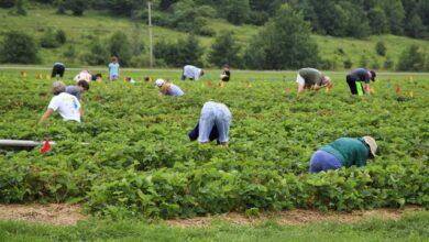 Photo of Українські заробітчани захворіли на коронавірус на фермі у Польщі
