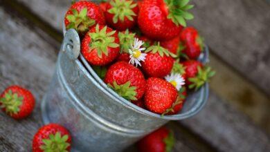 Photo of Ціни на фрукти та ягоди в Україні знаходяться на історично високому рівні