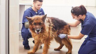 Photo of Ветеринарна клініка ЛКП «Лев» знову працює у цілодобовому режимі