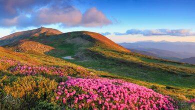 Photo of Спека і літні грози на Заході – погода на тиждень (КАРТА)