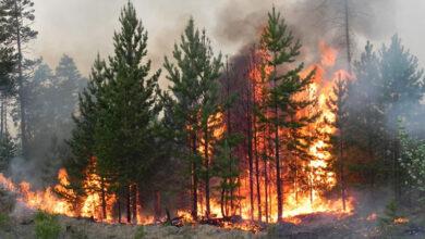 Photo of Бережімо ліс від пожеж. Мешканців Львівщини закликають дотримуватись правил безпеки під час відпочинку