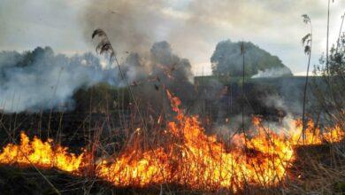 Photo of Із початку року на Львівщині сталося 2765 пожеж в екосистемах