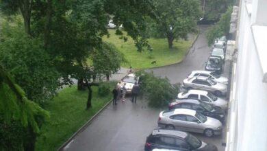 Photo of У Львові на пенсіонерку впало дерево