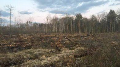 Photo of Збитки понад 11 млн грн: СБУ виявила масштабну вирубку лісів