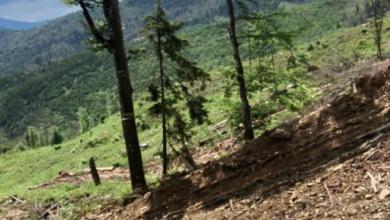 Photo of За незаконну вирубку лісу на Закарпатті двом чиновникам загрожує до 5 років в'язниці