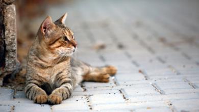 Photo of В Одесі кота розстріляли з пневматичної зброї