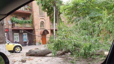 Photo of Негода в Одесі повалила 63 дерева, постраждали люди