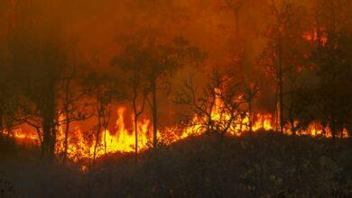 Photo of Знову не вигідно гасити: що відбувається з пожежами в Сибіру зараз