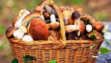 Photo of Мешканцям Львівщини нагадують, як уникнути отруєння грибами