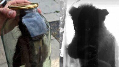 Photo of Закрив у банці і знімав сторіз: на Львівщині хлопець познущався над кошеням