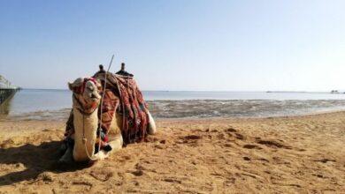 Photo of Відпочинок в Єгипті і Албанії 2020: Кабмін скасував самоізоляцію і тест після повернення