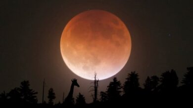 Photo of Який сьогодні, 4 липня, місячний день