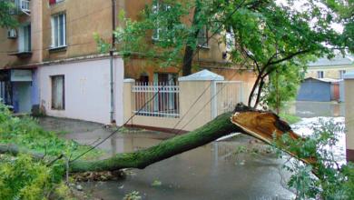 Photo of На Одещині випав град розміром з яйце, в Одесі дерево впало на чоловіка