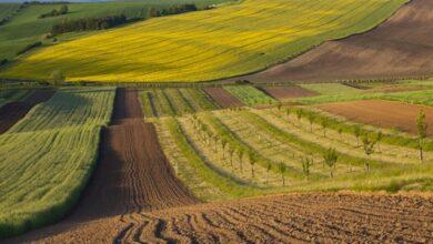 Photo of Майже 700 тиc. га земель вивели з державної власності з 2013 по 2020 роки – Лещенко