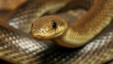 Photo of На Стрийщині чоловік потрапив до лікарні через укус змії