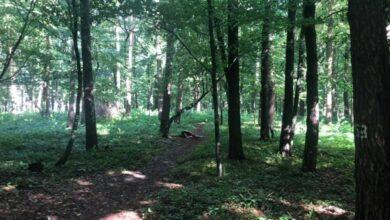 Photo of В парку у Брюховичах знайшли тіло чоловіка