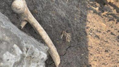 Photo of Поблизу Львова серед будівельного сміття знайшли людські рештки