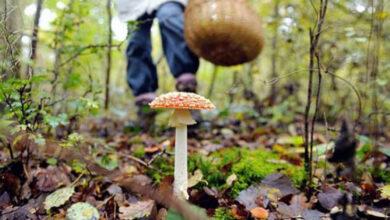 Photo of Через отруєння грибами двоє мешканців Бродівщини потрапили в реанімацію