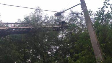 Photo of У Львові надзвичайники врятували кота, що три дні просидів на дереві