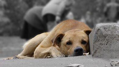 Photo of ЛКП «Лев» шукає волонтерів для підрахунку безпритульних собак. Як долучитися?