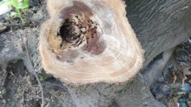 Photo of Під майданчик для вигулу собак у Парку культури незаконно зрізали дерева