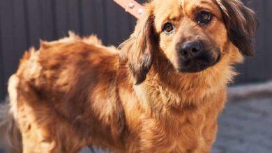 Photo of Привітний Барні і гавкучий Рубі. 10 собак із ЛКП «Лев», які шукають сім'ю