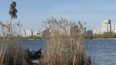 Photo of Знайшли із зашморгом в очереті: у Києві дівчина хотіла накласти на себе руки у прямому ефірі