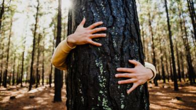 Photo of Швидкість не головне: у Лапландії пройде чемпіонат з обіймів дерев