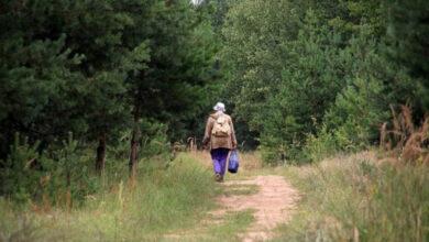 Photo of На Сокальщині розшукали бабусю, яка чотири дні блукала у лісі