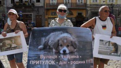 Photo of У Львові зоозахисники знову вийшли на пікет: вимагають побудувати притулок для тварин