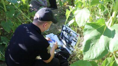 Photo of Скривавлене тіло хлопчика знайшли у полі. На Чернігівщині батько вбив 8-річного сина